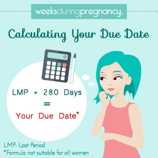 Pregnancy Calculator: The Definitive Due Date Calculator