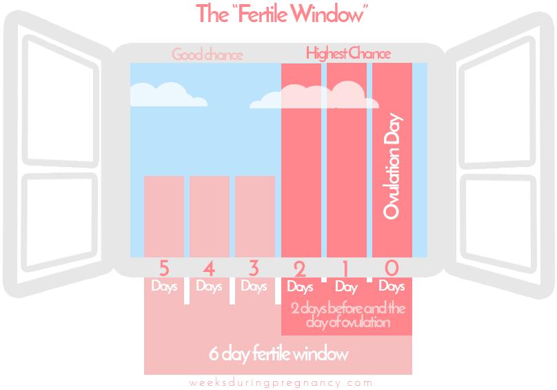 ovulation-timing-chart
