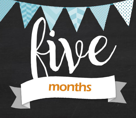 Announcement for 5 Months